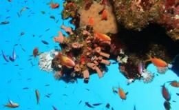 Scuba Dive at Las Marietas Puerto Vallarta Yachts3