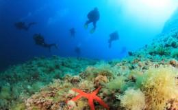 san-juan-scuba-for-non-divers-SJA3-mosaic