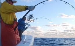 tuna-fishing-charter-captains02-800×400