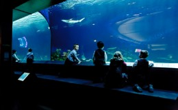 vancouver-aquarium-wedding-9