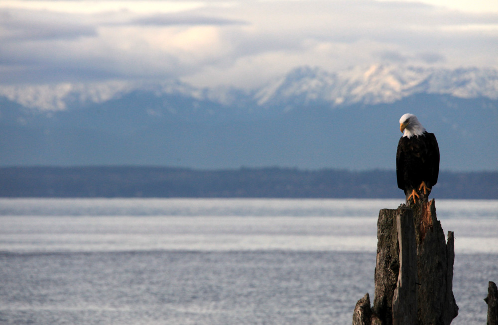 Puget sound for Seattle washington fishing charters